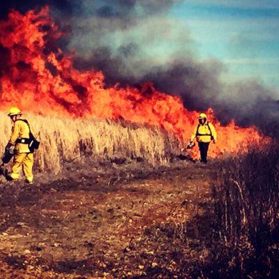 Wildfire Lawsuits Attorney Roseville CA - Gingery Hammer Schneiderman LLP
