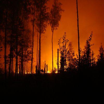 Wildfire Lawsuits Lawyer San Diego CA - Gingery Hammer Schneiderman LLP